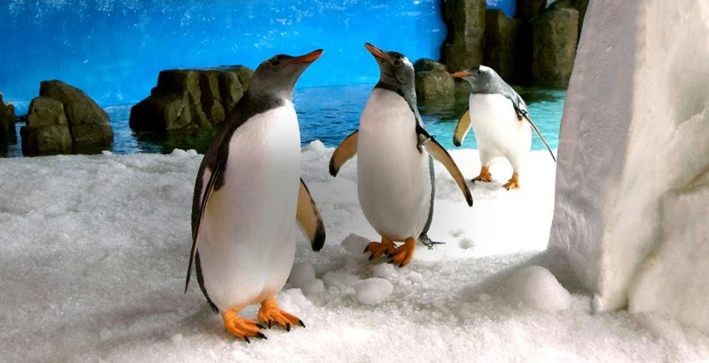 Two penguins from the Aquarium