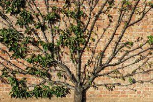 Tree near a wall
