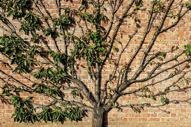 Tree near a wall