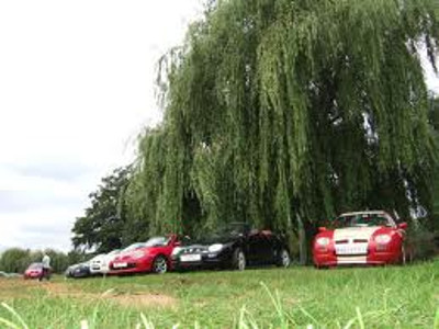 Cars parked under a tree