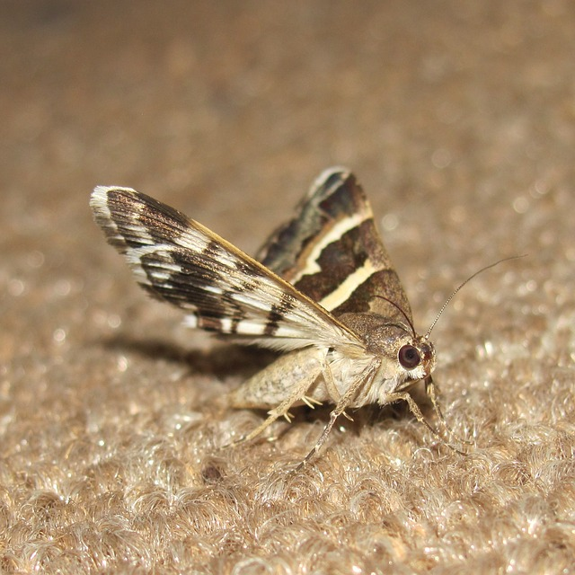 Moth on carpet