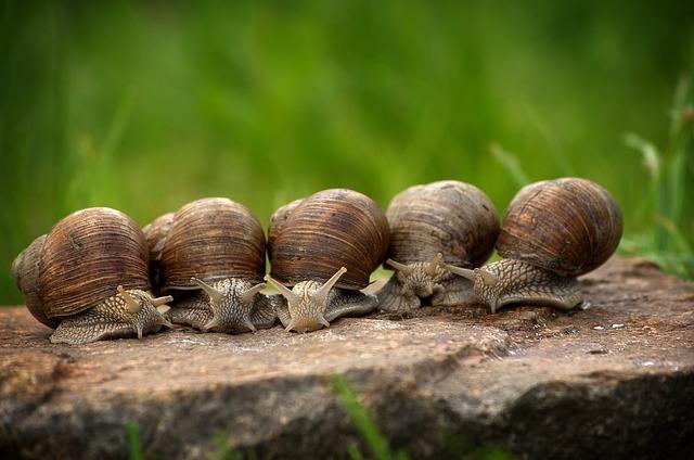 snail-2983235_640