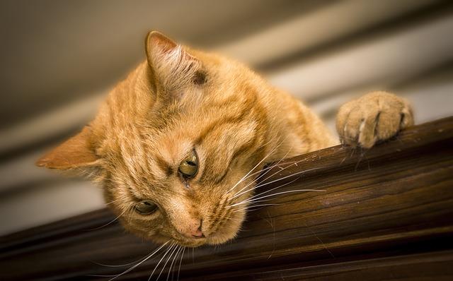 cat-2184682_640