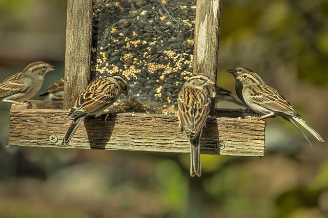 sparrows-3881399_640